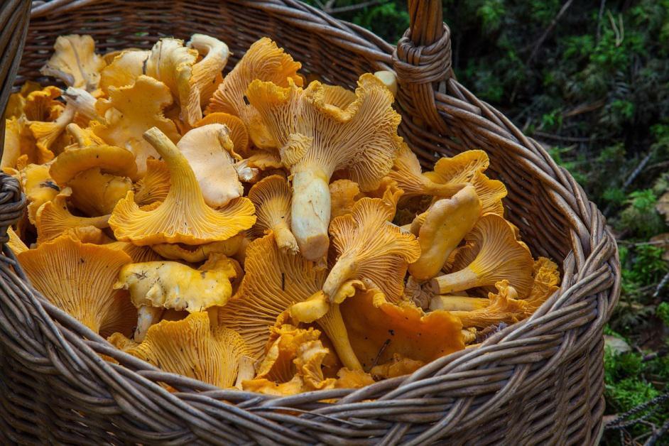 Mushroom Vitamin D